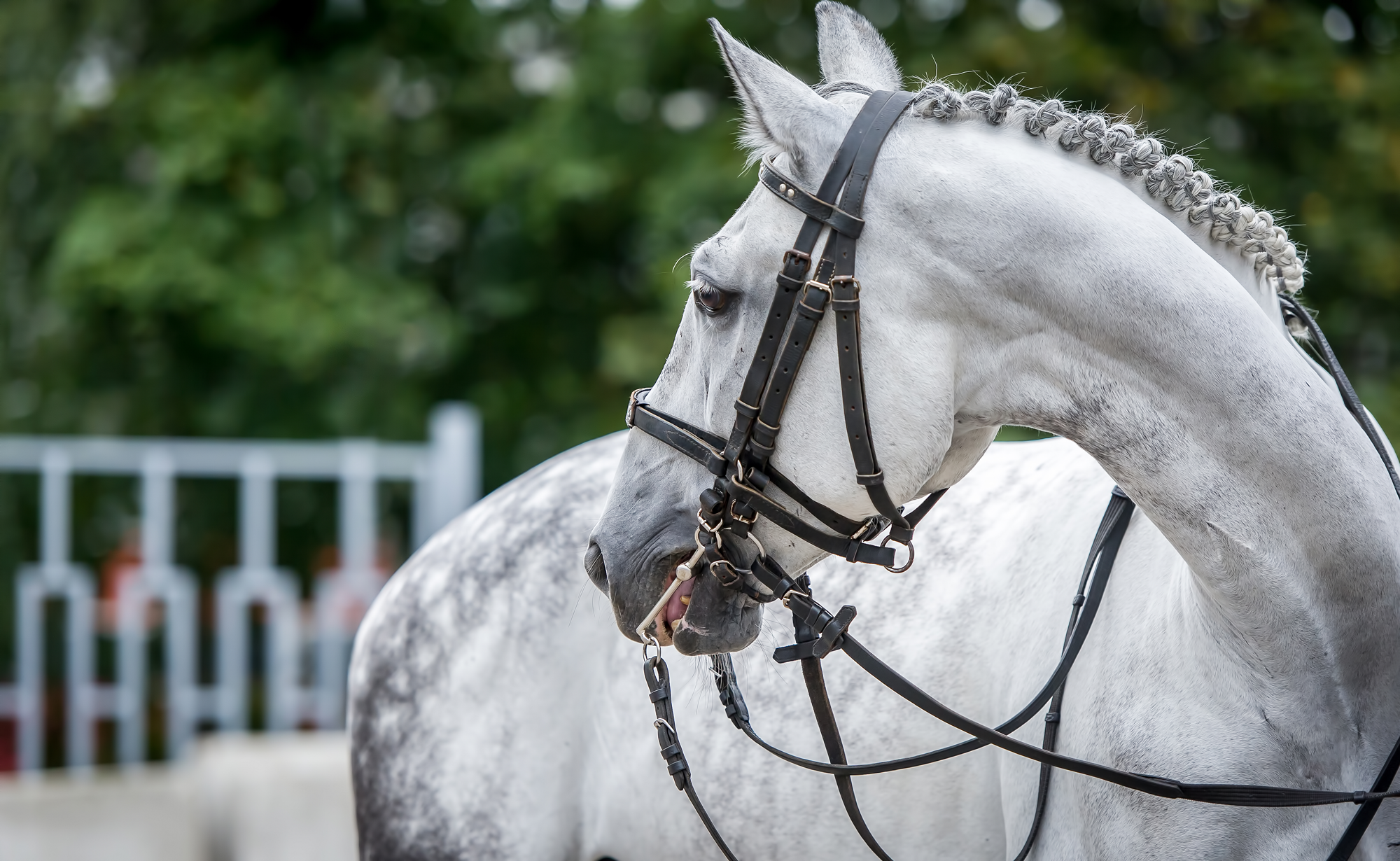 Find Equine Jobs in Avon, United Kingdom - The Grooms List