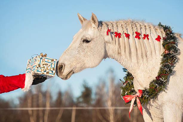 Tips for Grooms Working with Horses at Christmas - have a kool yule at work