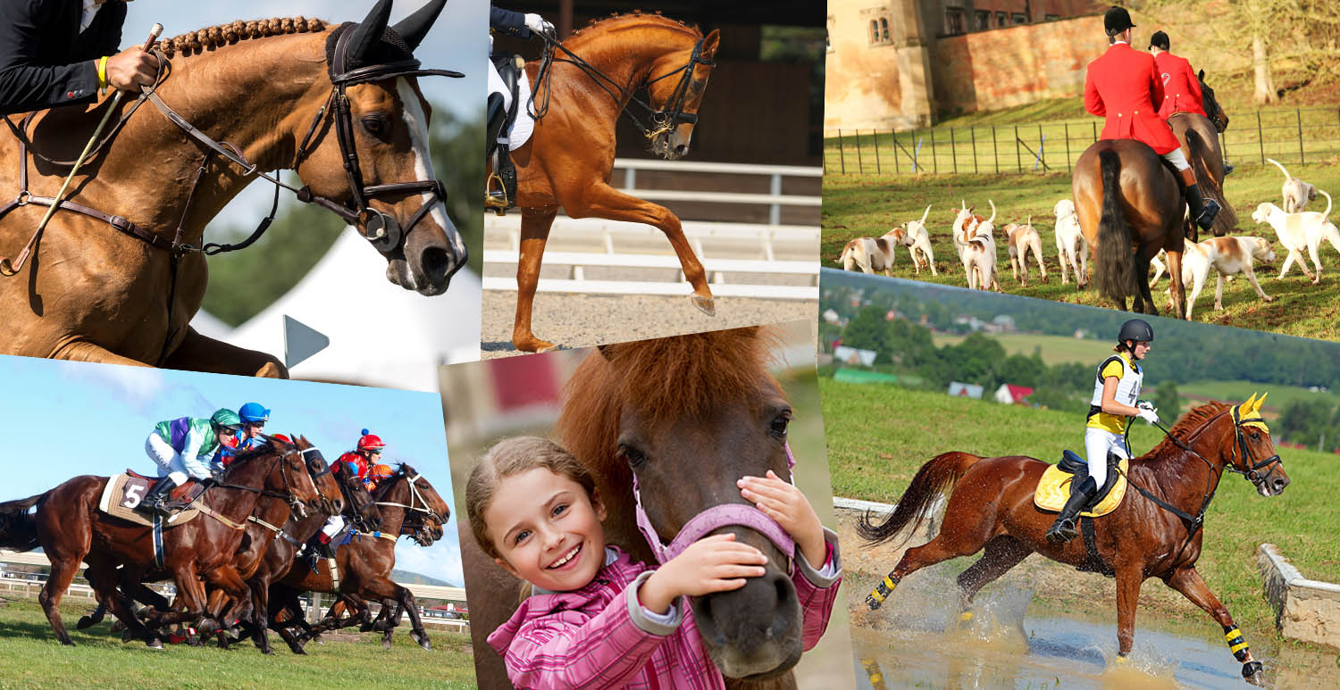 Which Equine Disciplines Reflect Your Character