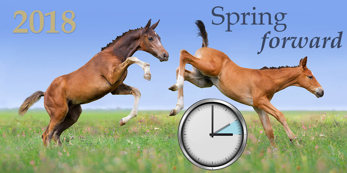 Spring Forward in the Equine Industry