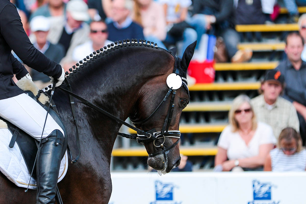 What are Dressage Grooms and Dressage Groom Jobs