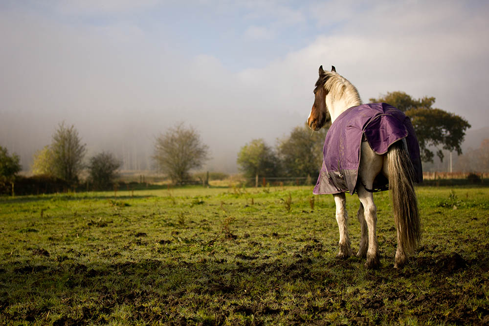 Getting winter ready in the equine industry