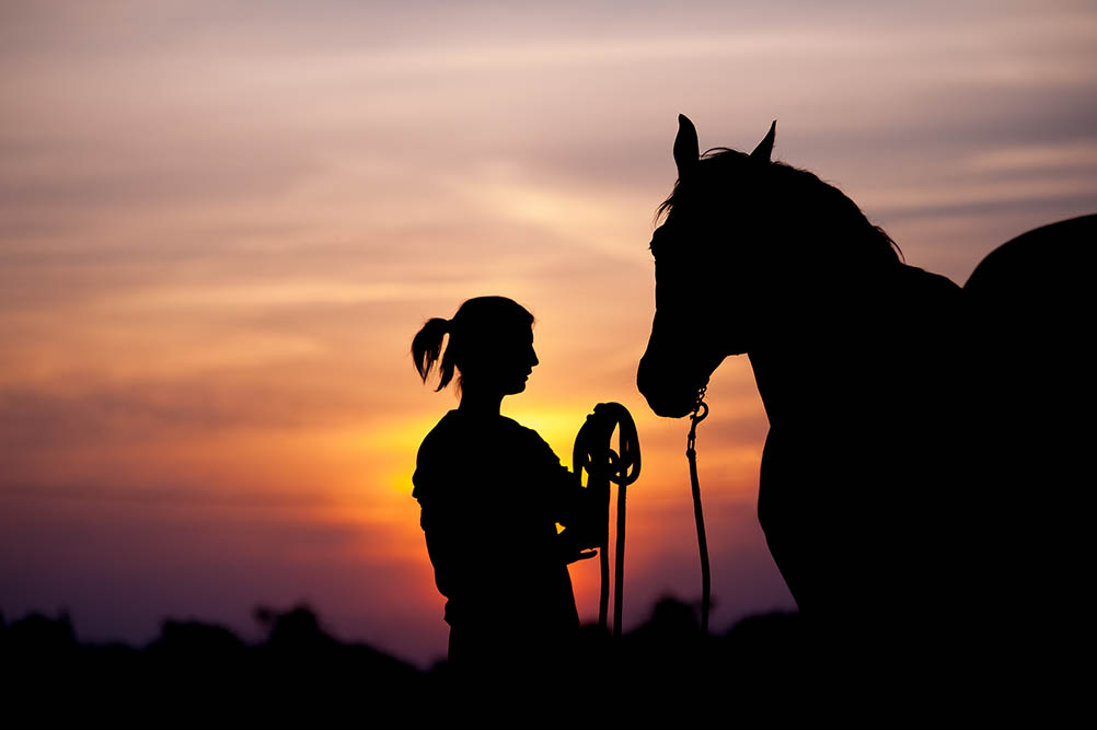 5 differences between horses as a hobby and as a career
