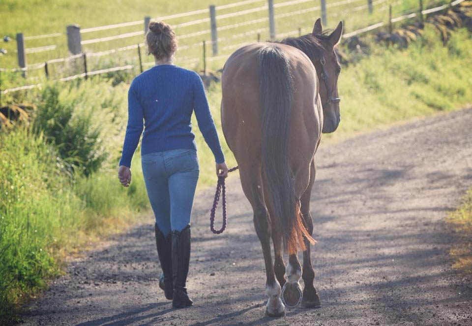 Jobs With Horses | Equine Careers | The Grooms List Equine